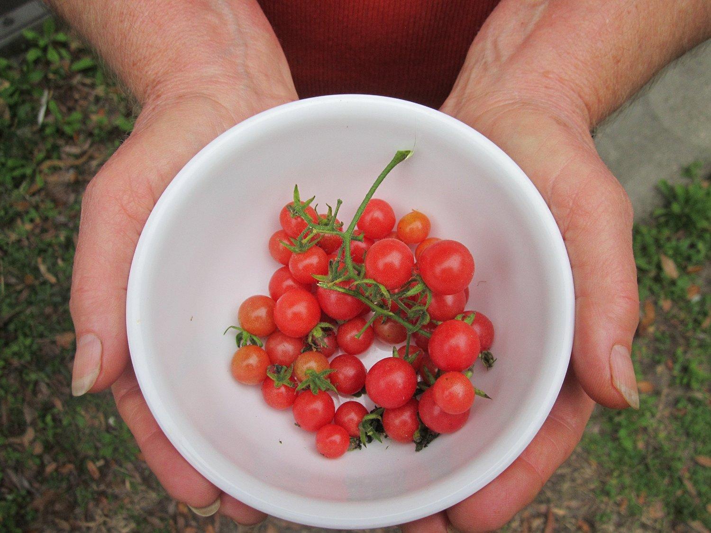 Orlando Realtor: ¿Qué es más grande, una uva o un tomate?