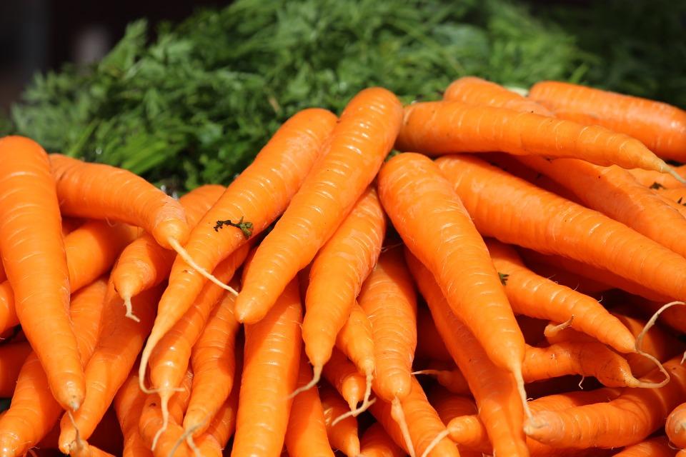 Danvers Carrot (100+ Seeds)